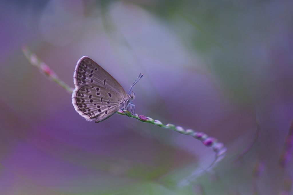 Butterflies Sitting on a Flower